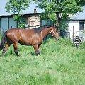 #agroturystyka #Arkadia #Boy #konie #Ratafia #Relaks #RewiaIII #stadnina #WielkaLipa #ślązaki