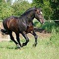 #Arkadia #Boy #KAma #ślązaki #WielkaLipa #konie #stadnina #PAlant