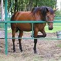 POLESIE - Pojezierze Łęczyńsko - Włodawskie; Okuninka #koń #Okuninka #Polesie