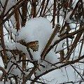 Dwudniowa zima...i komu to przeszkadzało??? Widok z mojego okna. #zima #śnieg #widok #biało