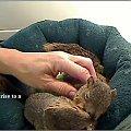 Daj trochę... #Wiewiórki