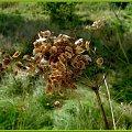 Jesiennie ale inaczej - uroda rozsiewanych nasion #jesień #inaczej #przeróbki