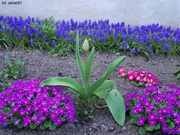 Wiosna :-) #wiosna #kwiat #kwiaty