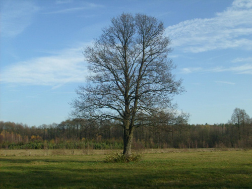 Jesień na łące #łąka #jesień #drzewo