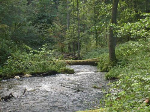 Rzeka Szum na Roztoczu #Roztocze #Szum