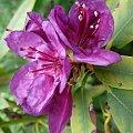 kwiatek ;) #fiolet #kwiat #ogród